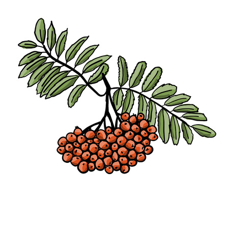 Rowan branch, sketch for your design.