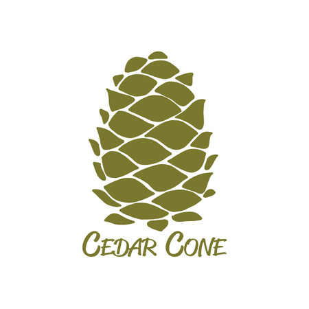 Cedar cone, sketch for your design Ilustracja