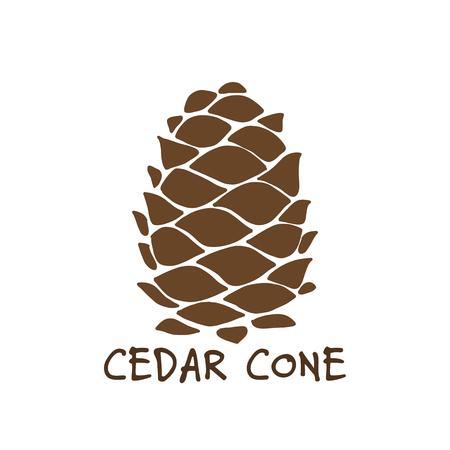 Cedar cone, sketch for your design Illustration