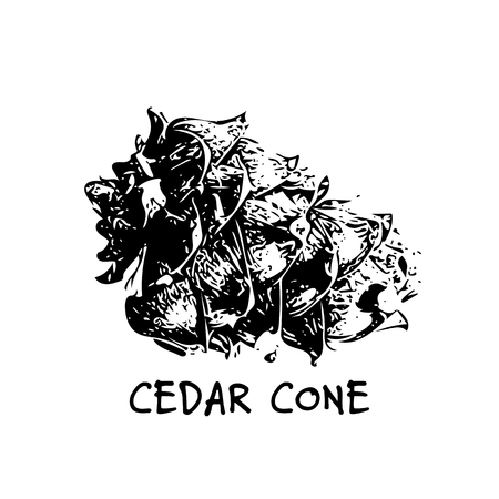 Cedar cone, sketch for your design 向量圖像