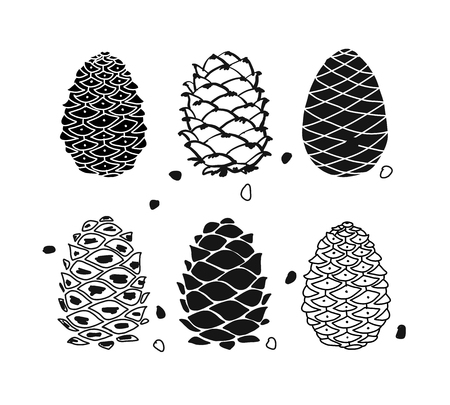 Cedar cone set, sketch for your design
