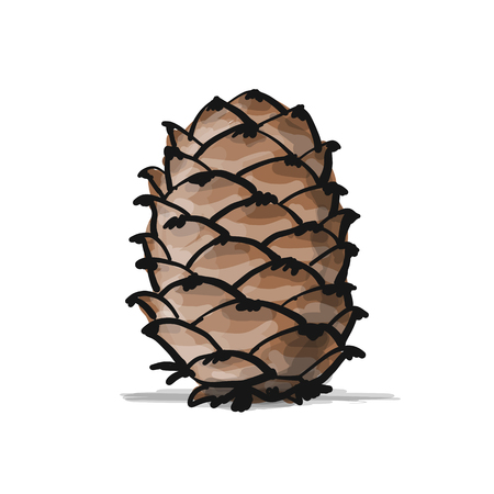 Cedar cone, sketch for your design. Vector illustration Illustration