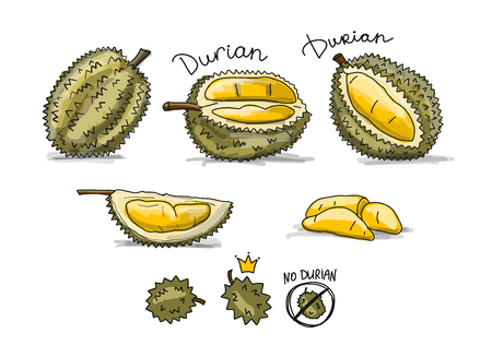 Durian, sketch for your design Banque d'images - 98848744