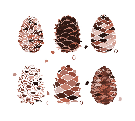 Cedar cone set, sketch for your design. Vector illustration