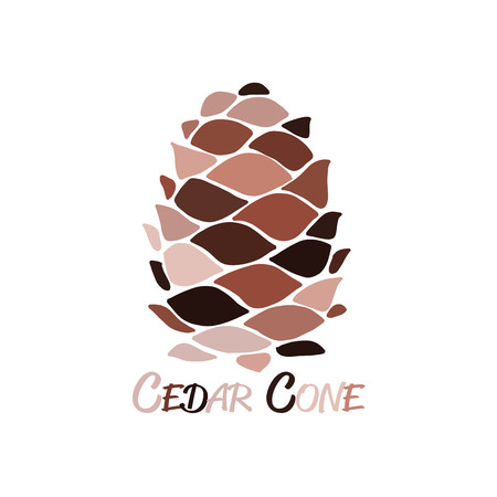 Cedar cone, sketch for your design. Vector illustration 向量圖像