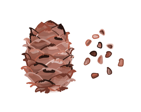 Cedar cone, sketch for your design. Vector illustration 版權商用圖片