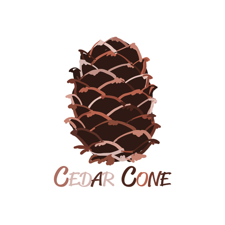 Cedar cone, sketch for your design. Vector illustration Stock Photo