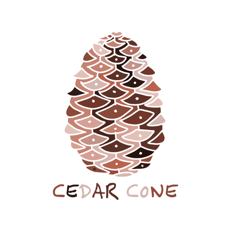 Cedar cone, sketch for your design Illustration