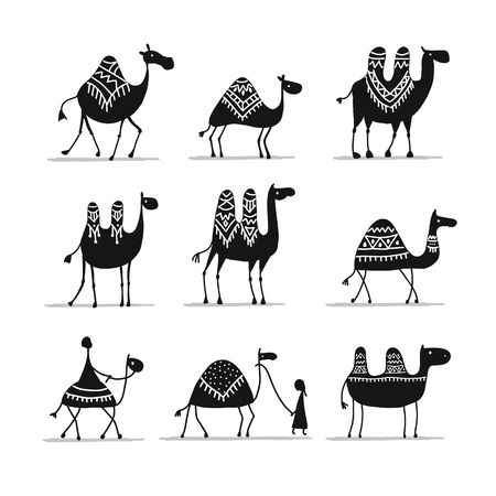 Camels collection, sketch for your design