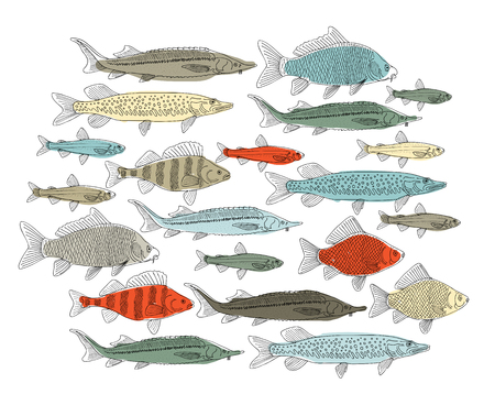 Fish collection, sketch for your design