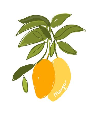Mango, sketch for your design. Vector illustration
