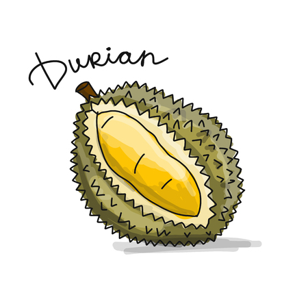 Durian, sketch for your design. Vector illustration