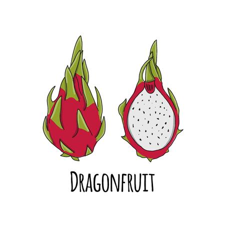 Dragonfruit, sketch for your design. Vector illustration Illustration