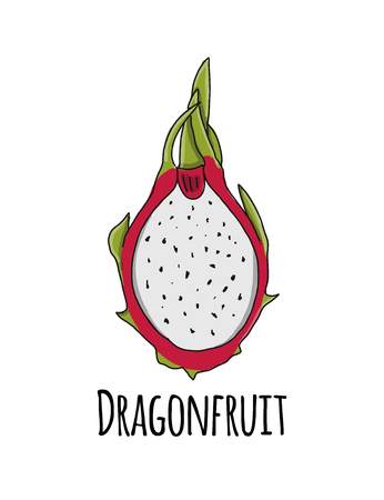 Dragonfruit, sketch for your design
