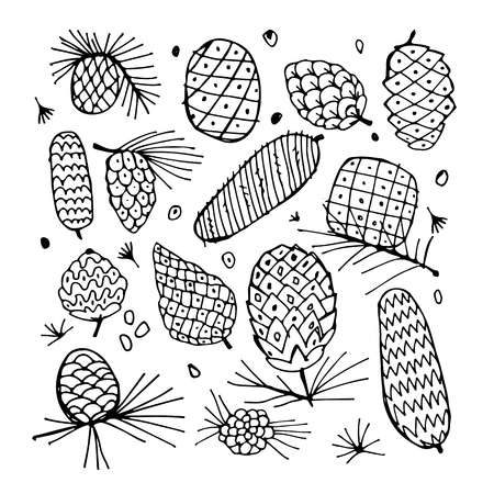 Cedar cone background, sketch for your design. Vector illustration