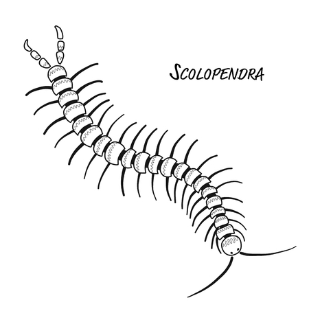 Scolopendra, sketch for your design Banque d'images - 120866467
