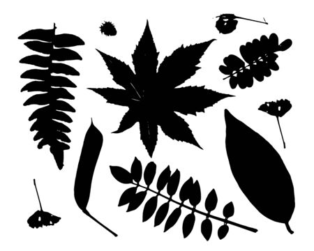 Leaves collection for your design. Vector illustration