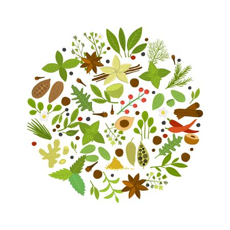 Spice shop, herbs and spices collection for your design Ilustracja