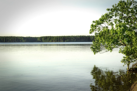 tree over the water photo