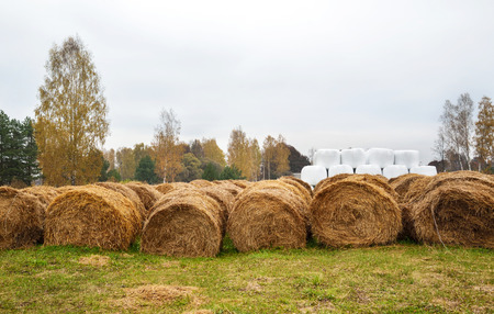 harvest: Bales of hay lie on a field