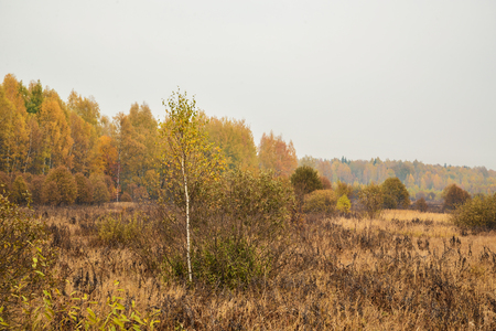 yellow trees: Autumn landscape with yellow trees and red foliage