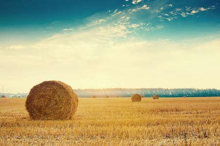 Round słoma bele w rosyjskich polach na zmierzchu i niebieskim niebie Zdjęcie Seryjne