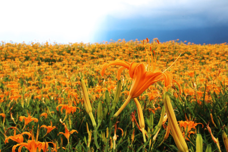 Beautiful scenery of daylily flowers with village and mountains in a sunny day Stock Photo - 86321273
