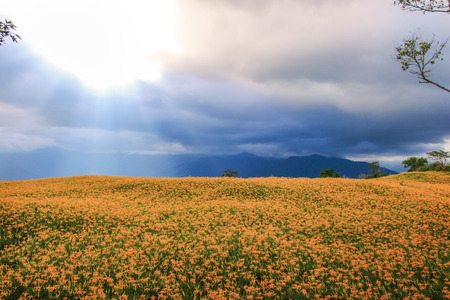 Taiwan Hualien beautiful scenery of daylily flowers with village and mountains in a sunny day