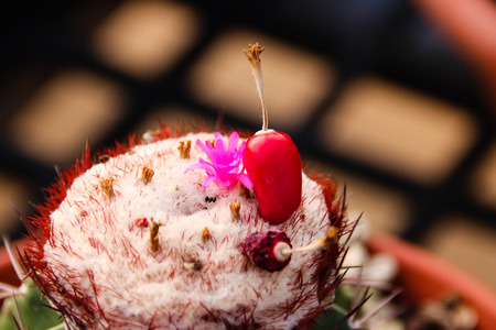 Meat plants and cactus and flowering Stock Photo