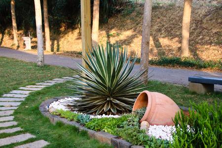 多肉植物とサボテン開花 写真素材