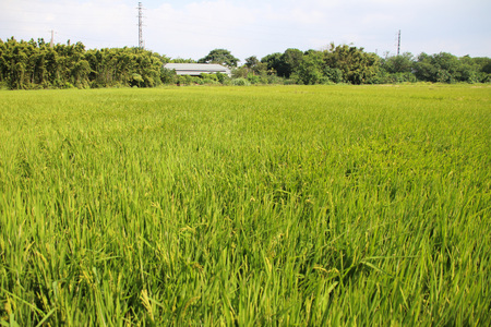 taiwan agriculture