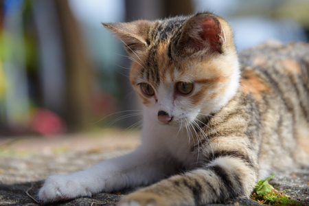 A small kitten stands on the road have a good time 스톡 콘텐츠
