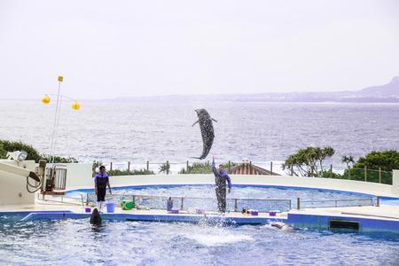 Okinawa, Japan-April 06, 2018: Black Killer whale show in Churaumi Aquarium, Okinawa.
