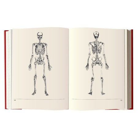skeleton on a vintage book Vector