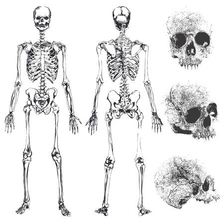 old people: group of skulls and skeleton in different positions