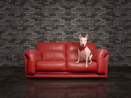 white dog over leather red sofa