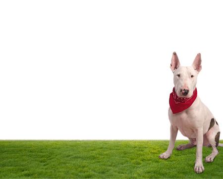 white dog on grass photo