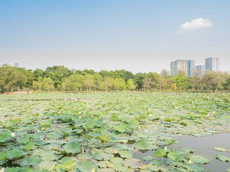 undisturbed: Vachirabenjatas Park (Rot Fai Park) in Thailand