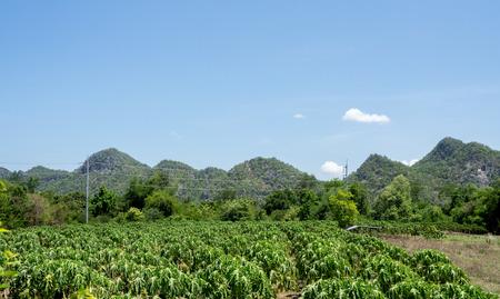 kanchanaburi: Kanchanaburi travelThailand Stock Photo