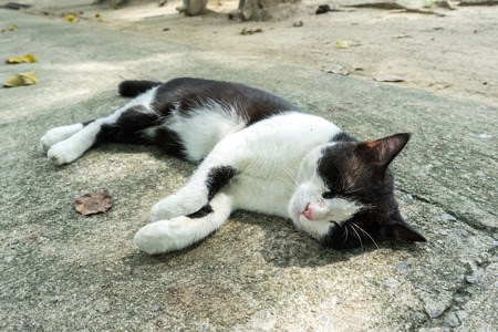 domestic garage: A Cat Have a Feeling Happy and Relax