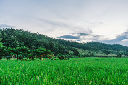 beautiful view Rice Field or paddy landscape nature and sky for top travel in thailand and unseen thailand at Hern tai ,Mae la noi ,Mea Hong Son Stock Photo