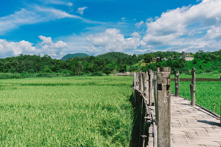 beautiful view landscape Bamboo bridge in rice field for top travel in thailand and unseen thailand at Chiang mai ,Thailand