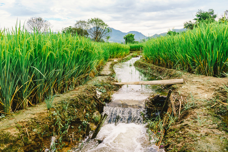 mea: beautiful view Rice Field or paddy landscape nature and sky for top travel in thailand and unseen thailand at Hern tai ,Mae la noi ,Mea Hong Son Stock Photo
