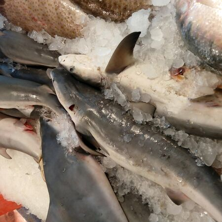 Baby Sharks being sold in Fish Market