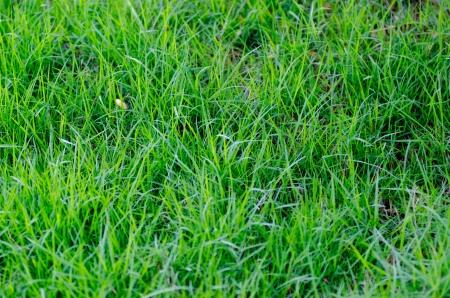 relent: A beautiful green lawn