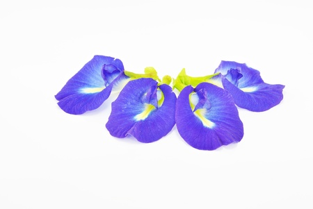 purple flower isolate on white background Stock Photo