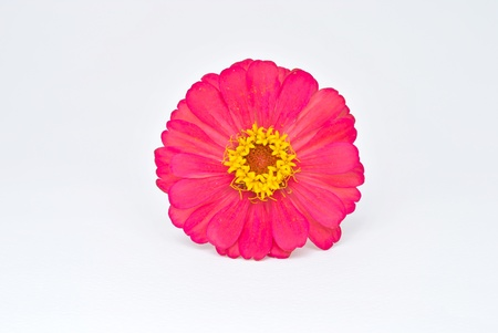 red flower isolate on white background