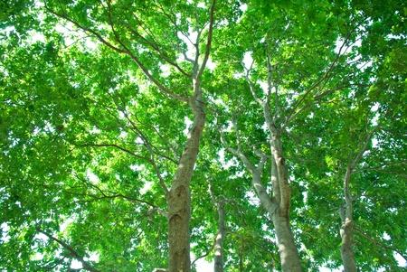 oxigen: tree