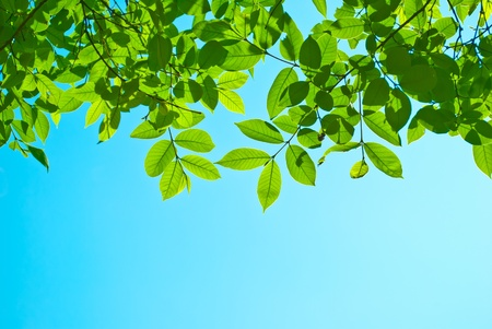 oxigen: green leaf Stock Photo