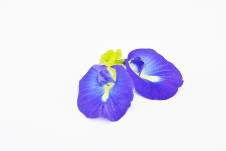 purple flower on white background  Stock Photo